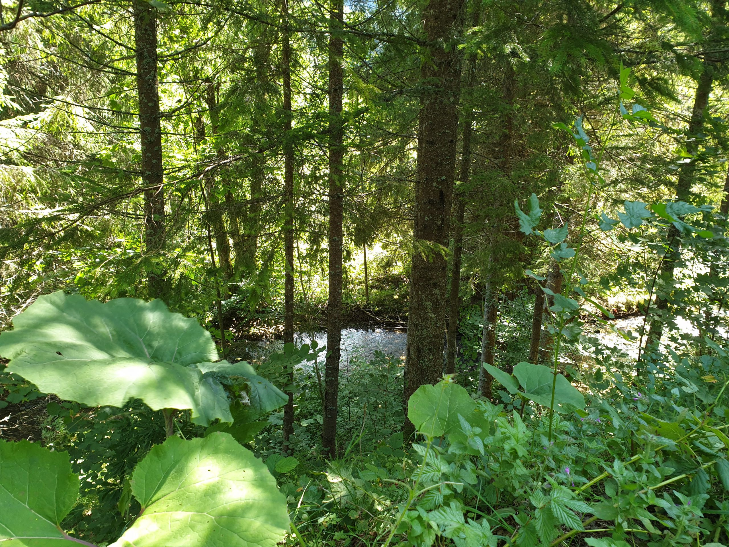 Le long de la rivière La Valserine